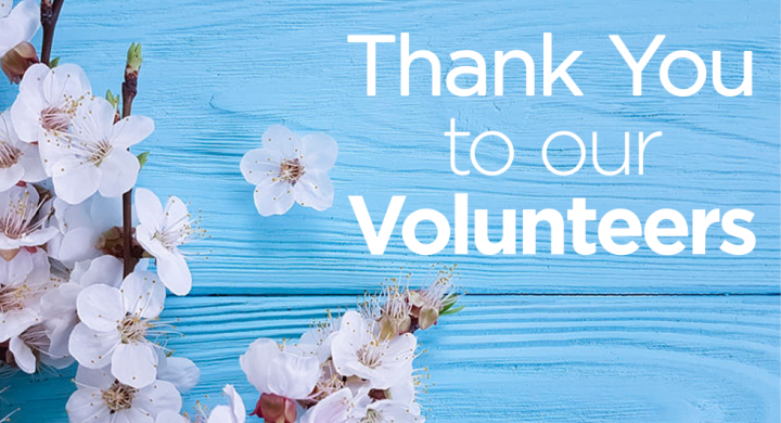 cherry blossoms on blue wood background with Thank You to our Volunteers text