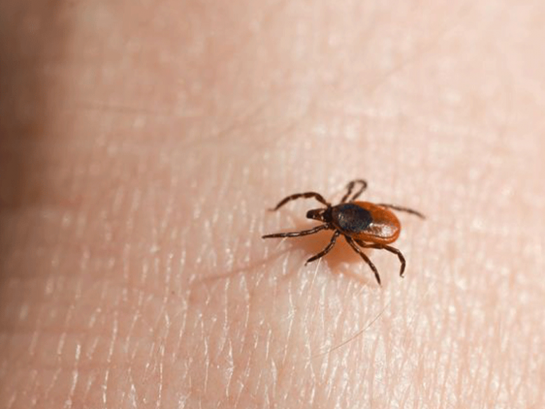 Protecting Your Family and Pets from Ticks